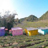 3 homestay đẹp xuất sắc ở Mộc Châu